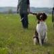 maltrato animal perros de caza